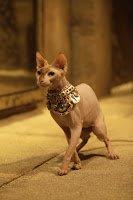 The Devious Cat, Ubasti