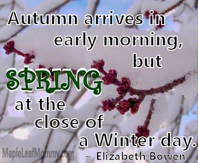Spring buds blooming, Winter contains hope for the Spring. Quote from Elizabeth Bowen.