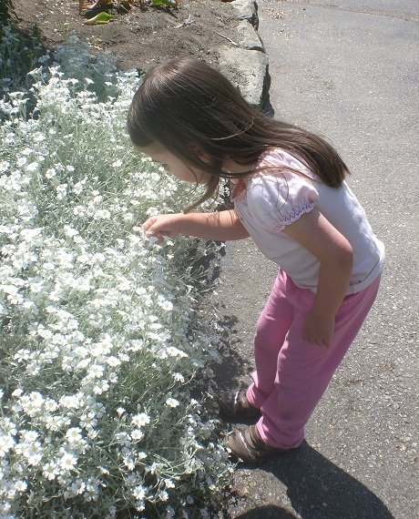 My daughter examines the flowers close up.