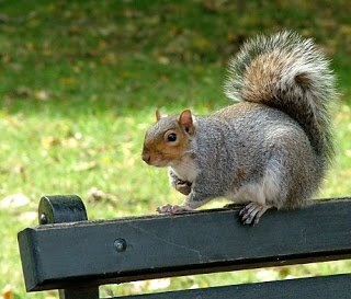 Close up of a squirrel in a park.