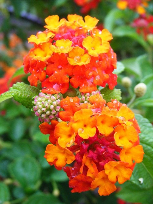 Bright orange and pink flowers covered in dew.