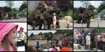 A Day at African Lion Safari, Go Wild!