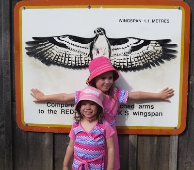 Children measuring arm span vs. hawks wingspan.