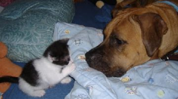 5 Tips from IAMS on How Cats & Dogs CAN Happily Co-Exist