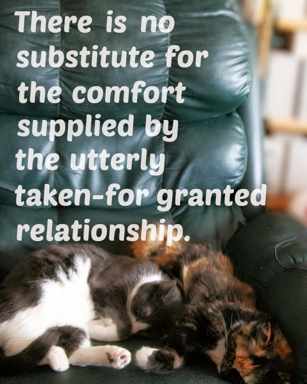 """There is no substitute for the comfort supplied by the utterly taken-for granted relationship."", quote from Iris Murdoch"