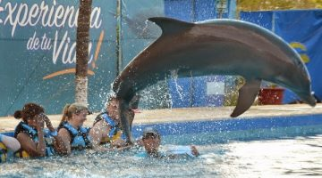The Day I Swam with the Dolphins and was Kissed by a Sea Lion… Review of Dolphin Discovery, Puerto Vallarta