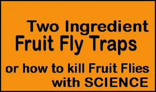 How to Kill Fruit Flies with Science! Quick & Simple Two Ingredient Fruit Fly Trap