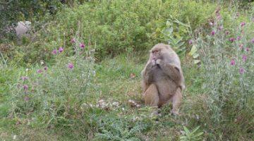 A September Visit to African Lion Safari